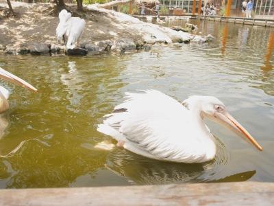 RICCA HAIR 梅田中崎 6月の日程 花鳥園