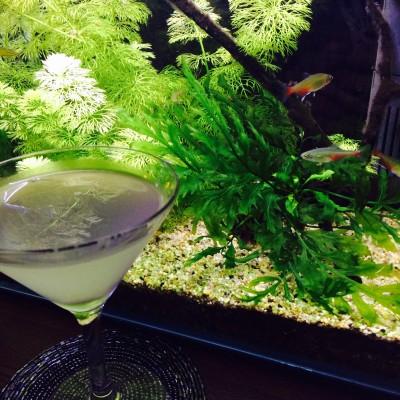 中崎町美容室 RICCA 近藤熱帯魚店 Bar