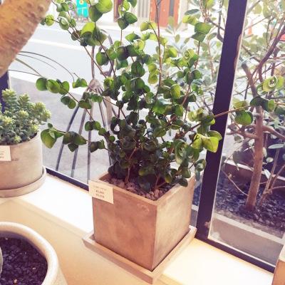 大阪 植物 販売 プレゼント