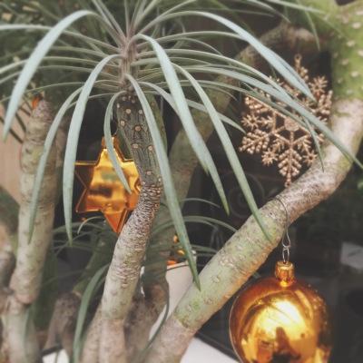 植物 クリスマス 飾りつけ
