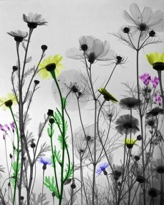 nature-xray-art-arie-vant-riet-19